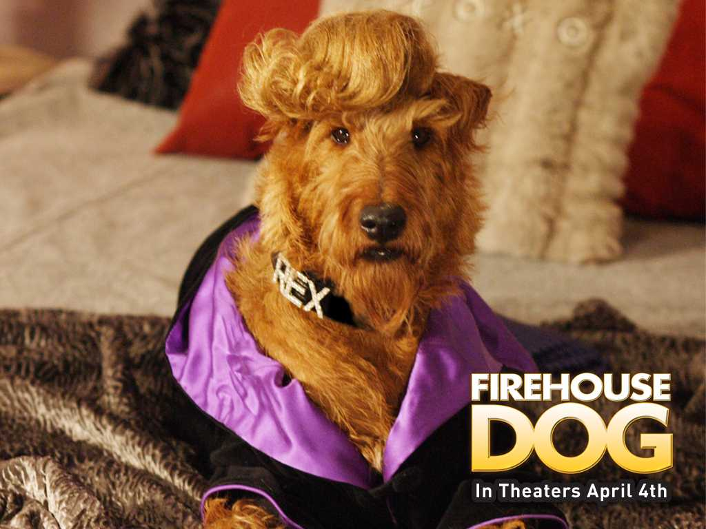 http://kinokladovka.com/uploads/posts/2010-08/1283276378_kinopoisk.ru-firehouse-dog-514650-w-1024.jpg